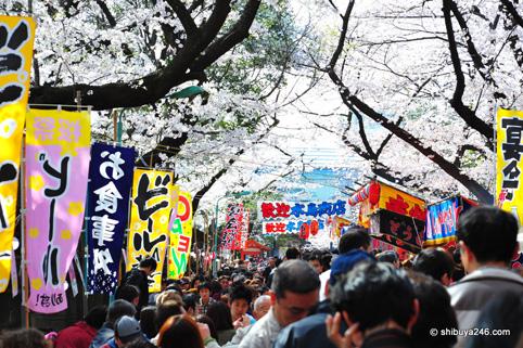 Disfrutando del Hanami en Ueno