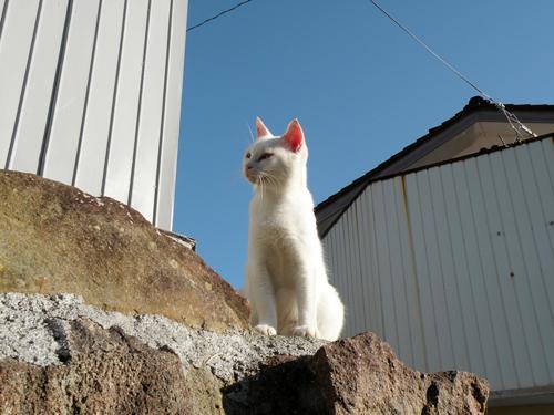 Especial lo más leido en la historia de JaponPop.com: Tashiro, la Isla de los Gatos