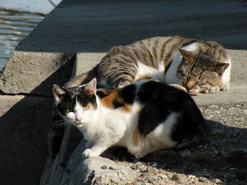 Tashiro, la Isla de los Gatos (Japón)