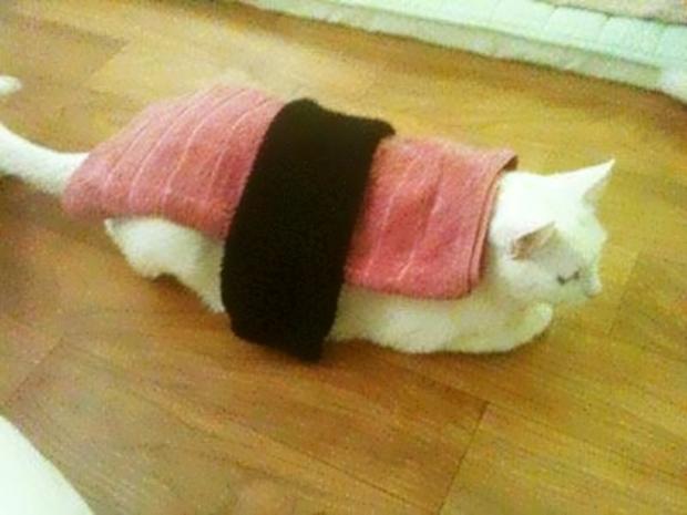 """Lo último en Corea: Convierte a tu mascota en un """"Sushi Fluffy""""."""