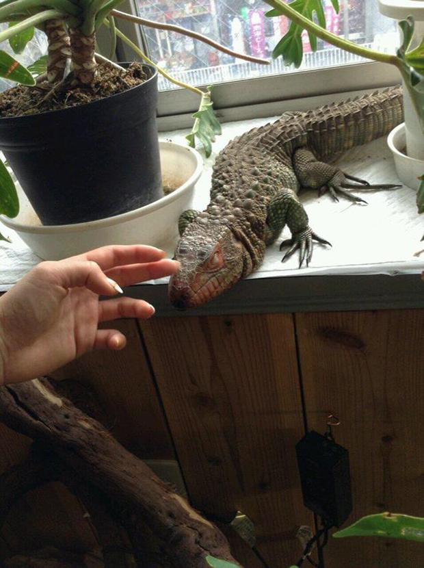 Cafetería de Reptiles